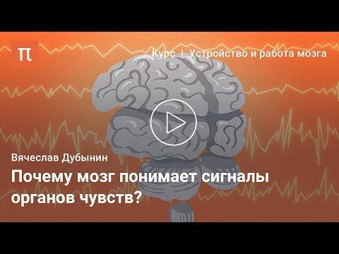 Мозг и сенсорные системы — Вячеслав Дубынин