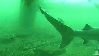 Cape Fear Shark Cam 2016 03 24 09 40