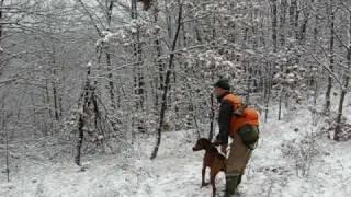 Psi za lov divlje svinje/ wild boar hunting dogs/ cani da cinghiale caccia 2