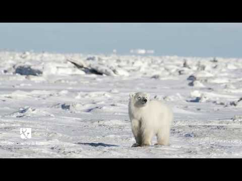 The Great Ice Bear Adventure - Canada Luxury Travel with Abercrombie & Kent UK