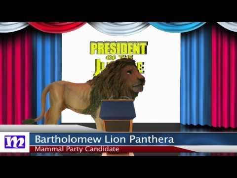 Lion Speech   President of the Jungle 2017   MMNN Newsbreak   Many Miniatures Theater