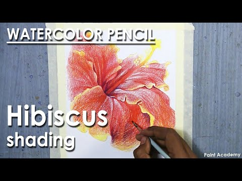 Watercolor Pencil Drawing: Hibiscus Flower