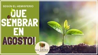La Huertina De Toni Calendario De Siembra.Como Plantar Sandias En El Huerto Cultivar Ecologico La