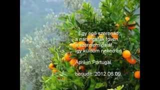 Portugál szerenád