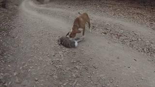 lov na zeca 44 - lovacka grupa corak