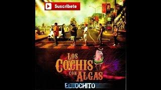 Los Cochis Con Algas - Carino Donde Andaras