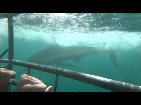 The Shark Hunters—Jaws Returns–Gansbaai, South Africa