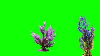 Magic Flowers green screen video Effects 2019 Teelsingh