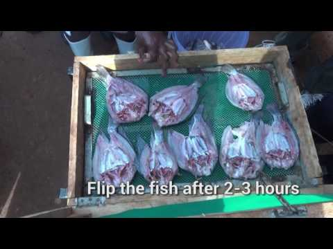 Postharvest Fish Handling and Technologies
