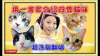 【魚乾】用一首歌介紹四隻貓咪!超洗腦廣告曲 [ 自然嗨!] 翻唱。