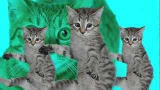 Best Kittycat Song [OFFICIAL] feat. GRUMPY CAT