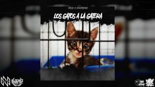 Los gatos a la gatera - Massi Nada Mas ( AUDIO)