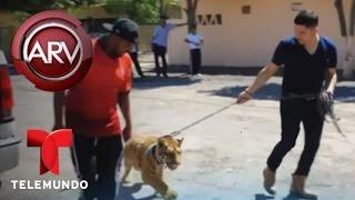 Larry Hernández celebra el día del padre en Larrymanía   Al Rojo Vivo   Telemundo