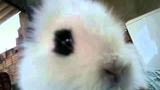 Mc coelhinho-musica eu sou um coelhinho