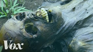 The fascinating process of human decomposition