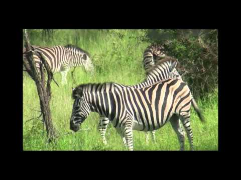 South Africa Part 3 – Safari.WMV