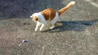 サッカーをする猫?  LINDBERG  「今すぐ Kiss Me」