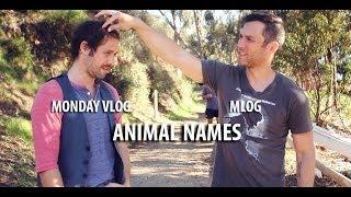 Monday Vlog (Mlog) - Animal Names