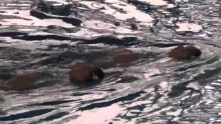 Synchronized Swimming Gabriella + Mika 03