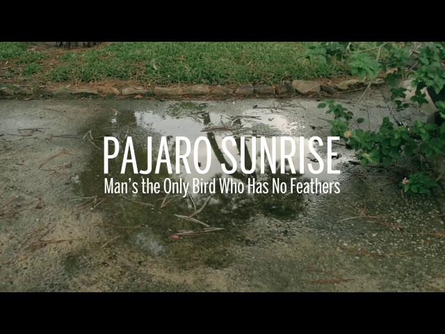 Pajaro Sunrise - Man's the Only Bird Who Has No Feathers del disco The Collapse