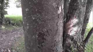 Pavouk u Zelenohorských chalup - Šumava 21.8.12.MTS