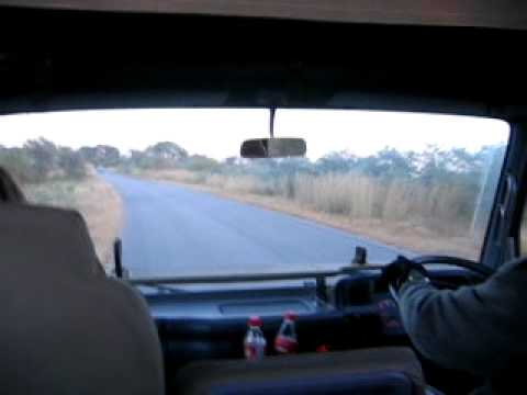 Sunrise Game Drive, Skukuza Camp in Kruger National Park in South Africa