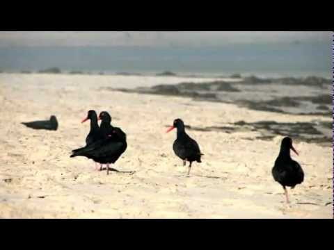 Stock Footage for SALE – South Africa Travel Channel