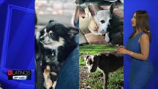 Los perritos de D'Latinos