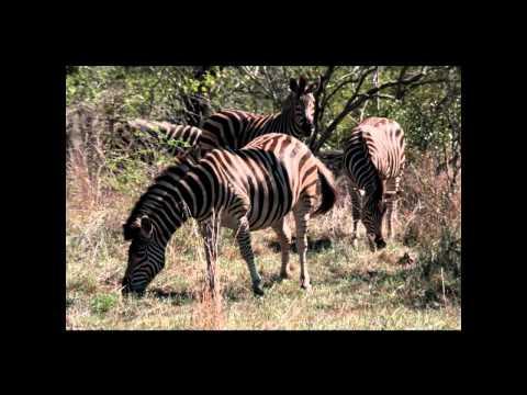 Kruger National Park Day One SOUTH AFRICA