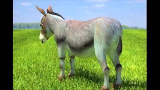 Bleszt & DJ Joker - Booty Too Fat (Donkey)