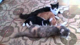Gatos da Ana