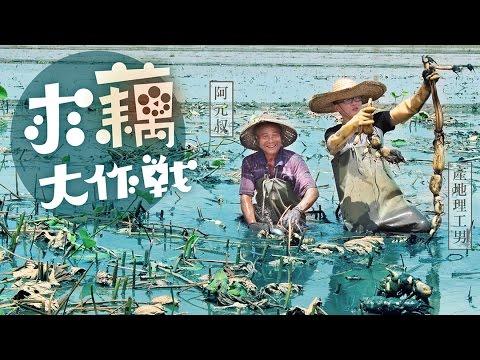 求藕大作戰 - YouTube