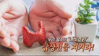 TV메디컬약손_갑상선(칠곡경북대병원 내분비내과 최연정교수) 다시보기