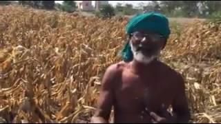 Feelings of farmers