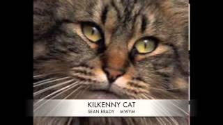 KILKENNY CAT