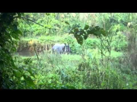 Parc Nacional de Chitwan (Nepal)