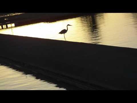 M029B Stork