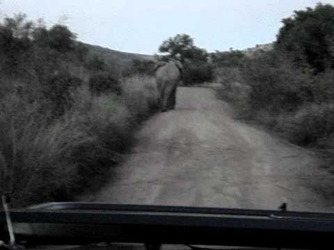 Traffic jam in the Pilanesberg Game Reserve, South Africa