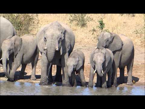 Elephant Herd – Kruger National Park, South Africa  May 2012