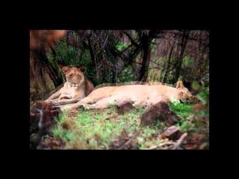 Pilanesburg National Park SOUTH AFRICA