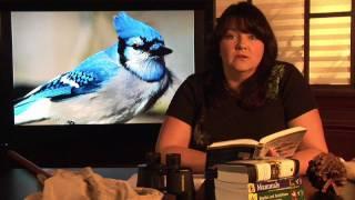 Animal Habitats : Where Do Blue Jays Live?
