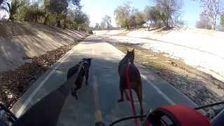 Thor and Loki bike pulling