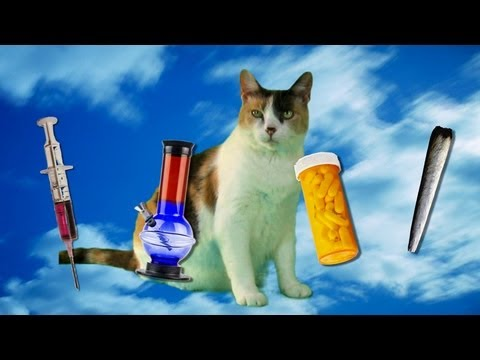 Creationist Cat vs. How to Make Money Selling Drugs