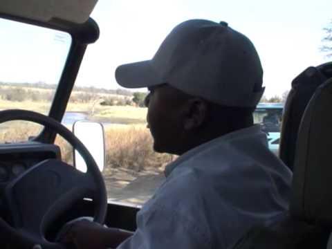 Hipopotam w Parku Krugera
