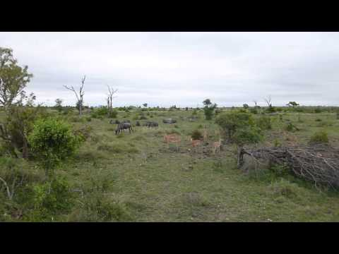 South Africa 2012 – Impala and Wildebeast