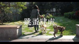 HAPET 好寵 (hapet.com.tw) ★【除蚤特輯】用力和跳蚤說拜拜!