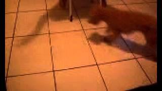 Cachorra correndo atrás da sombra.