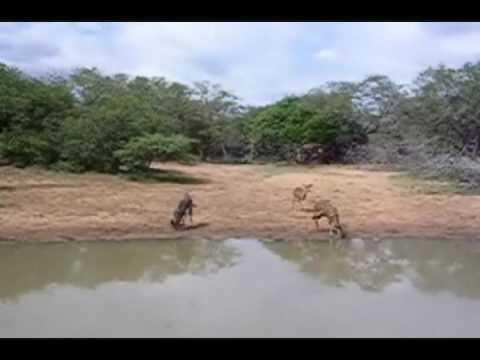 South Africa Kruger Park