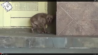 Rescue Dog ● Rescuing a terrified abandoned dog [Hope For Paws – Animal Aid]