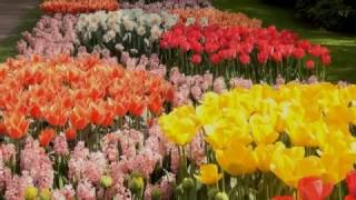 The Jumping Jewels - Theme For Dreamers (relaxing guitar instr.) Official Keukenhof Music Video